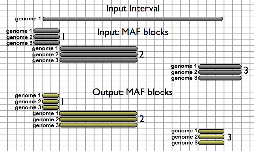 In this representation of the Extract MAF blocks given a set of genomic intervals tool, a single genomic interval is found to overlap with three MAF blocks in a source alignment set.  MAF blocks 1 and 3 extend beyond the boundaries of the provided genomic interval and are trimmed before being included in the tool output.