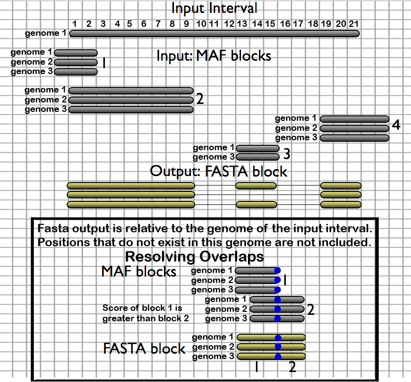In this illustration of the Stitch MAF blocks given a set of genomic intervals tool, four MAF alignment blocks are stitched into a single FASTA alignment block composed of only those positions that exist in the genome of the provided intervals.