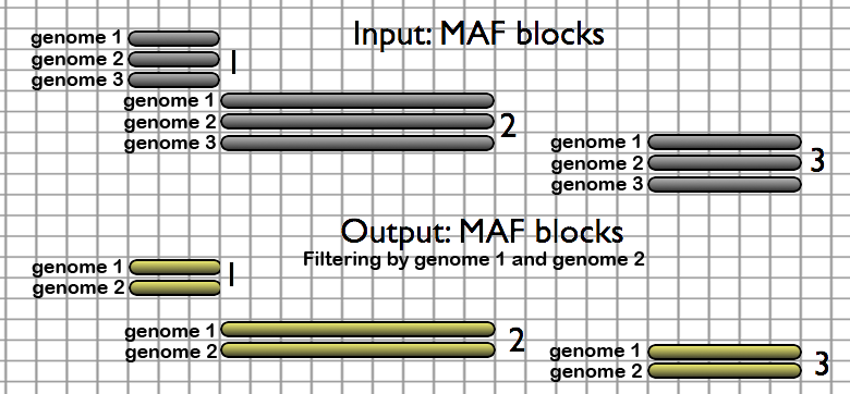 The Filter MAF blocks by Species tool allows users to remove undesired species from alignments.  When species are removed from an alignment set, alignment columns that now contain only gaps are collapsed (excluded from the output).