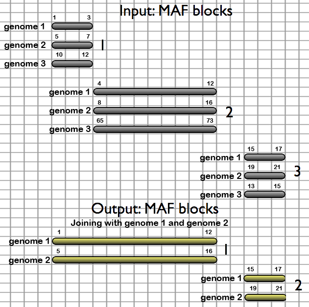 Like the Filter MAF blocks by Species tool (figure 5), the Join MAF blocks by Species tool allows users to remove undesired species, but takes an additional step to combine genomically adjacent blocks together.  When genome 3 is removed from the alignment set, two of the three alignment blocks are joined together, resulting in only two output alignment blocks.