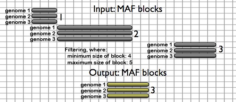 The Filter MAF blocks by Size tool removes alignment blocks that fall outside of a specified size range. Here all blocks which have more than 5 or less than 4 alignments columns are removed.